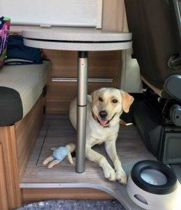 Wohnmobil mieten mit Hund Bayern München