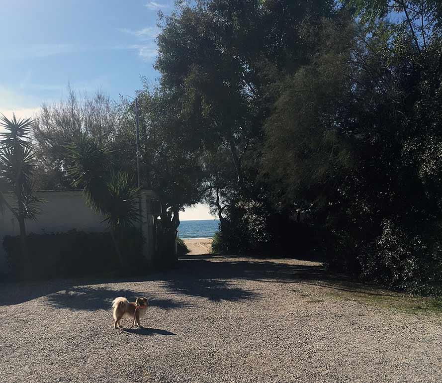 Hund im Wohnmobil_Italien