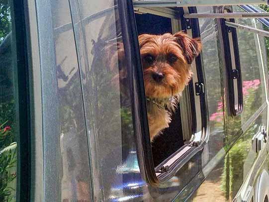 hund klein im wohnmobil