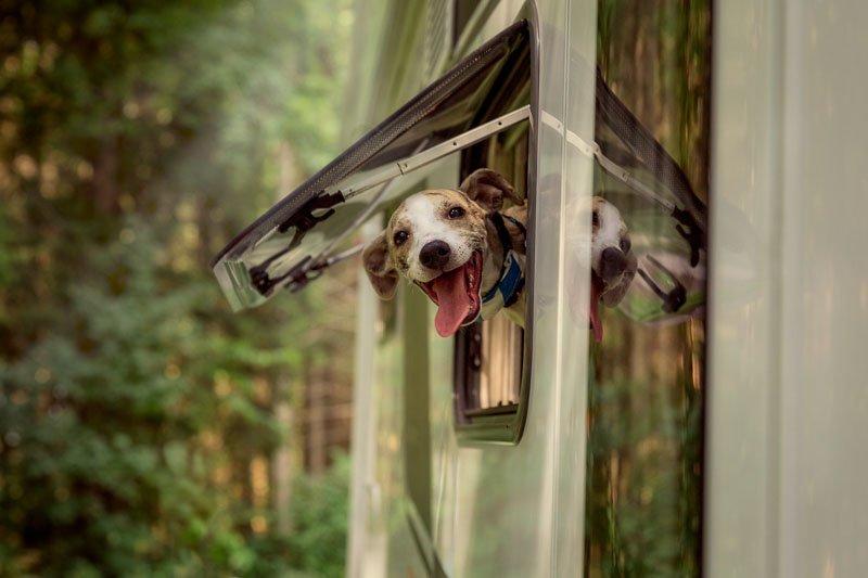 wohnmobile mieten mit hund