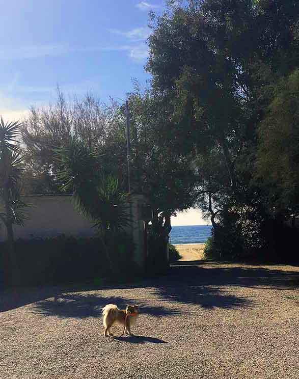 Wohnmobil mieten Hund Italien